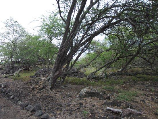 Kaloko-Honokohau National Historical Park: Along the path