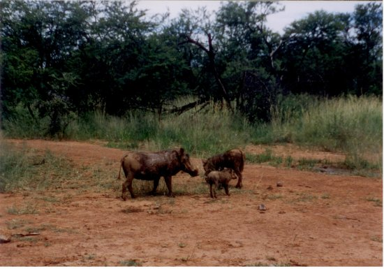 Pilanesberg National Park รูปภาพ