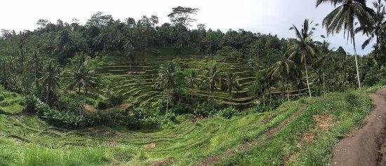 Kerobokan, Indonesia: Tegalalang ricefield - June 2016