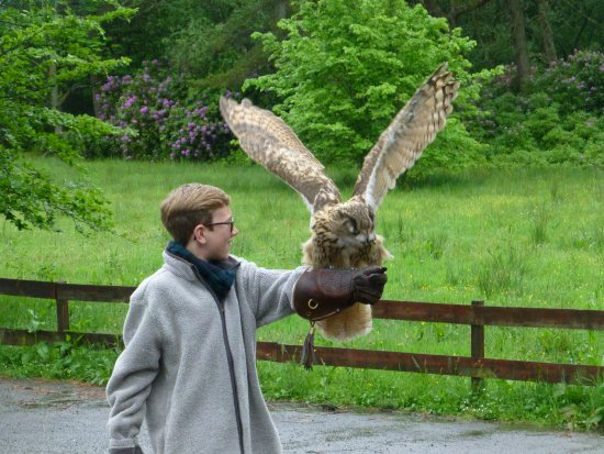 Strathblane, UK: Taking flight