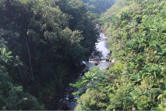 Skyline Eco Adventures - Akaka Falls Photo