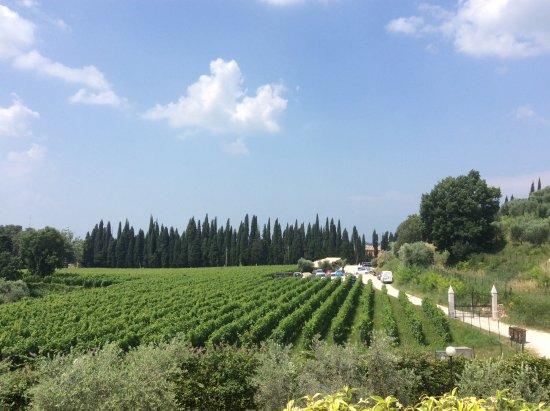 Agriturismo Fontanelle: Panorama vigneti