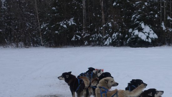 Just Short of Magic: Dog sledding