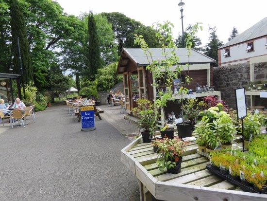 Dundee Botanic Garden - Restaurant Reviews, Phone Number & Photos ...