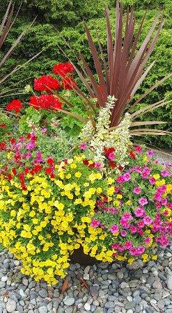 Λονγκ Μπιτς, Ουάσιγκτον: Entrance garden plant.