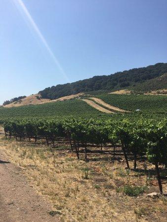 Schug Carneros Estate Winery: photo0.jpg