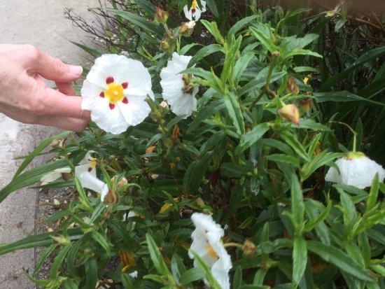 St Austell, UK: Des fleurs de toutes varietes