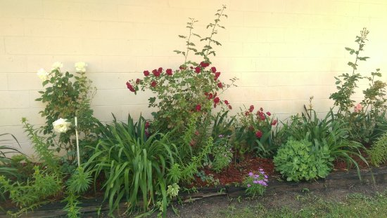 Jensen's RV Park and Motel: Stop and smell the roses in one of our many garden areas