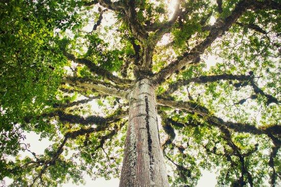 Kin Winik Jungle Tours: Tree of life