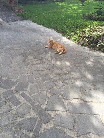 Villa Mercede: Resident outdoor cat; very friendly