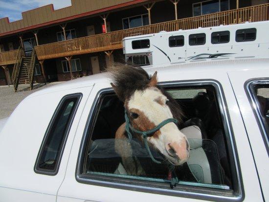بيج بير موتيل: Cookie in his town car