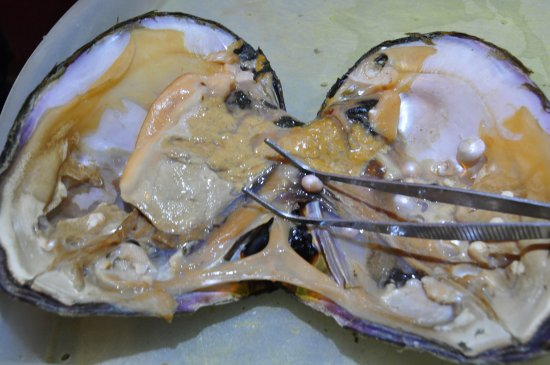 oyster with pearls picture of fenghui pearl shanghai tripadvisor