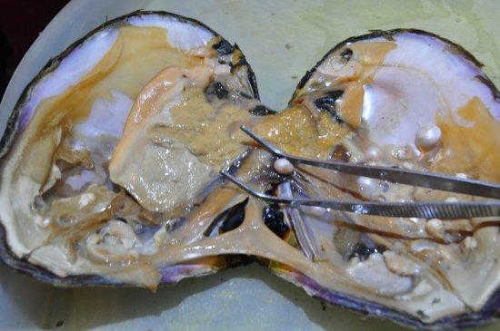 Fenghui Pearl
