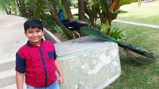 Amara Sanctuary Resort Sentosa: IMG-20160518-WA0018_large.jpg