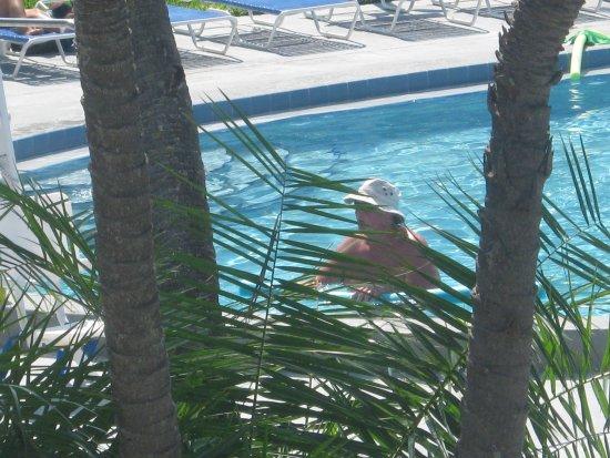 Dolphin Beach Resort: early float