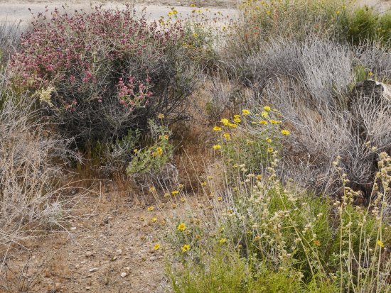 Black Rock Canyon Campground: YELLOW FLOWERS