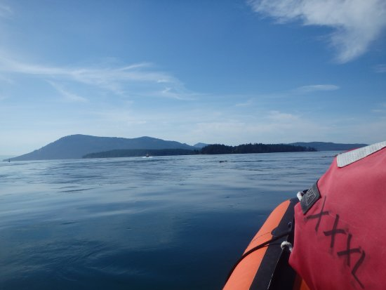 Cowichan Bay, Canadá: Professional Helly Hanson gear to keep you warm and comfy