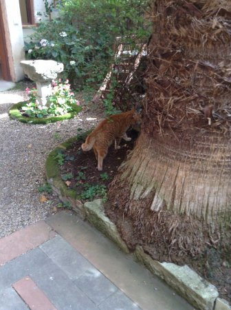 Hotel Empress Zoe: The cats roam around quite freely including in the garden and the breakfast room.