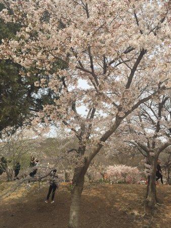 Lushun Longwangtang Cherry Park: photo1.jpg