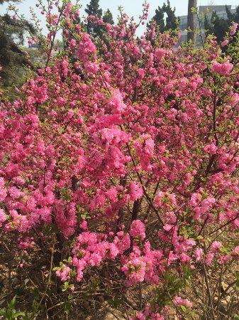 Lushun Longwangtang Cherry Park: photo3.jpg