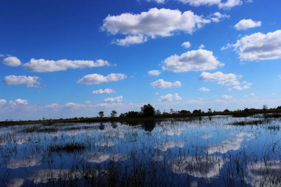 Everglades City, FL: Reflections of beauty