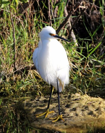Everglades City, FL: the bird with yellow feet