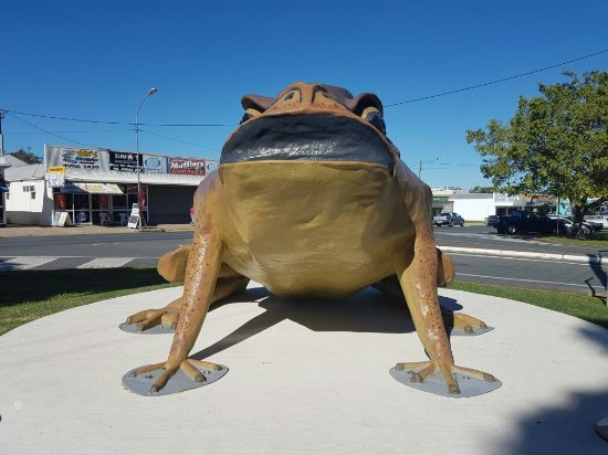 Sarina, Australia: Big Cane Toad