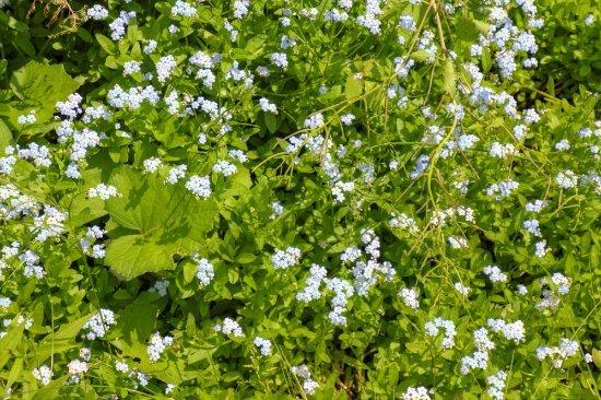 Brockway, Pensilvania: More flowers