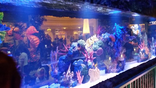 Fish tank picture of conservatory botanical gardens at for Fish tank las vegas