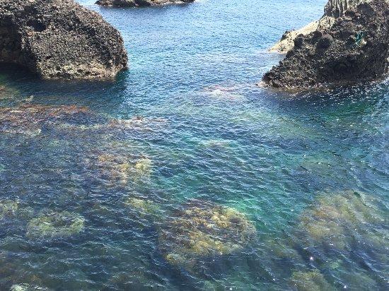 Echizen-cho, Japan: かなり透明度が高く、水が綺麗です。
