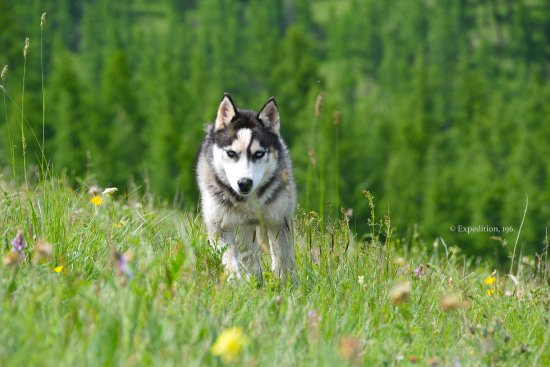 Jalman Meadows Wilderness Camp: The family dog!