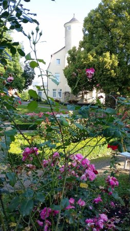 Hotel Am Rosengarten: Rose Garden in June