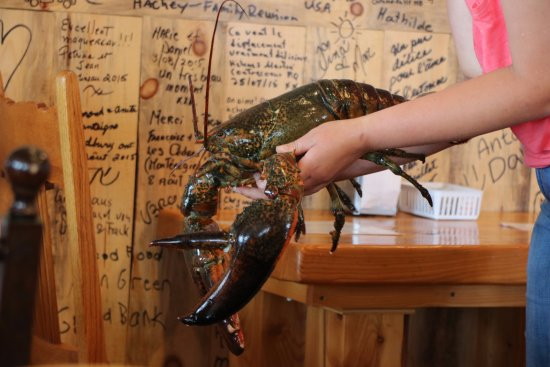 Miscou, Canada : The top side of a giant lobster. Signatures & comments of guests on the wall.