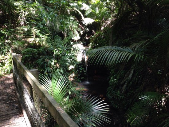 Ratapihipihi Scenic Reserve Walk : Great day out of town with the kids without leaving the city