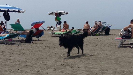 Foto di Bau Beach