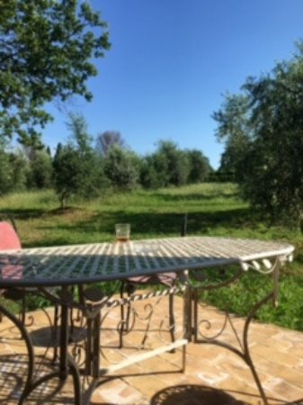 Our patio off our kitchen looking into a olive grove - so peaceful
