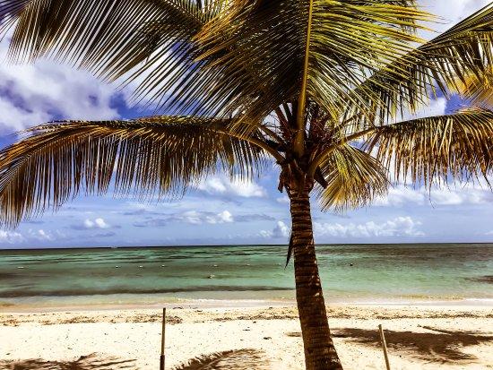 Pigeon Point Beach: photo0.jpg