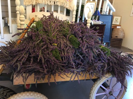 Dahlonega, Georgien: Our first wagon load of our harvested lavender - smells wonderful!