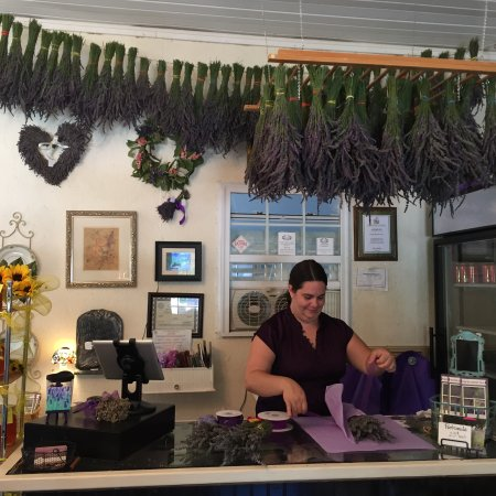 Dahlonega, Georgien: Check out our lavender shop - see our harvested lavender hanging up in the shop!