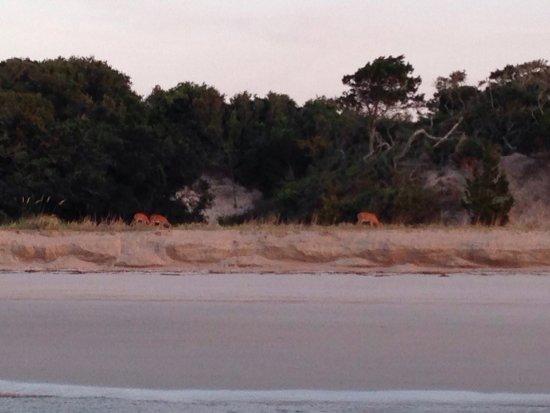 Fernandina Beach, FL: photo2.jpg