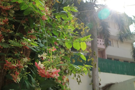 Hotel Kabli Photo