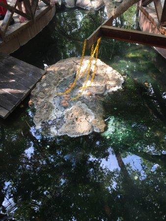 Felda Residence Hot Springs: photo6.jpg
