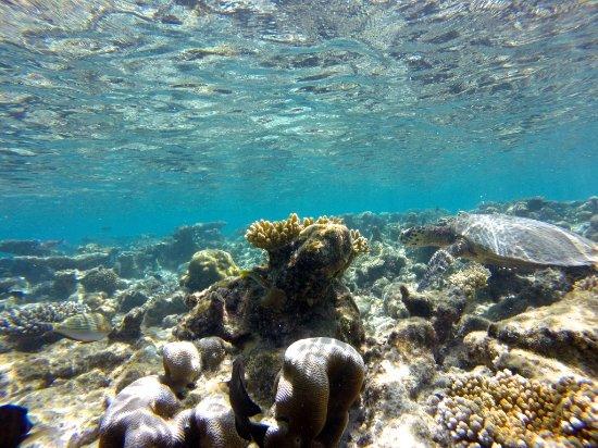 Vakarufalhi Island Resort: Snorkeling