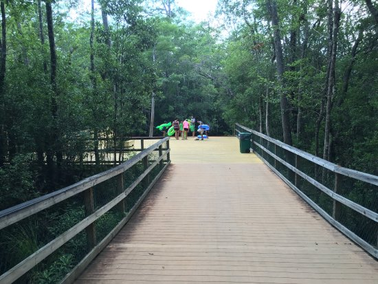 Turkey Creek Nature Trail: Great walk into swamp and creek banks