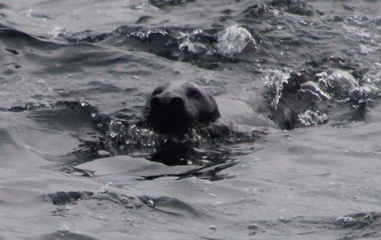 Gjesvaer, Noruega: Animais marinhos são vistos a todo o momento!