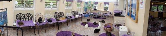 Mann Cat Sanctuary: The cat's conservatory