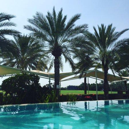 Desert Palm PER AQUUM: photo0.jpg