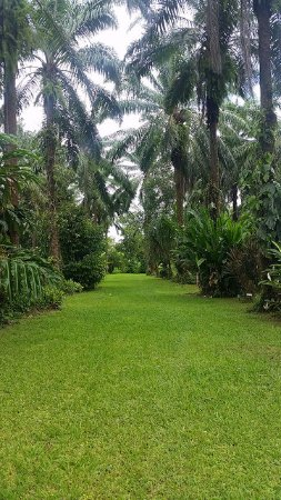 Rio Claro, Costa Rica: Beautiful maintained garden