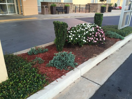 SpringHill Suites Macon: Very nice greenery