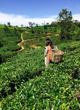 Heritance Tea Factory: photo3.jpg